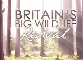 Britain's Big Wildlife Revival