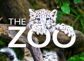 The Zoo (2017)