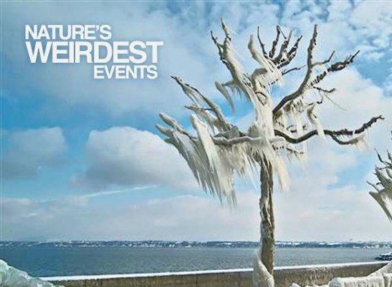 Nature S Weirdest Events Season  Episode