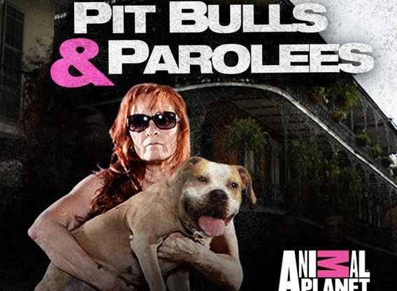 Pit Bulls And Parolees Tv Show Air Dates Track Episodes Next Episode