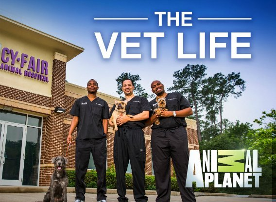 Image result for vet life