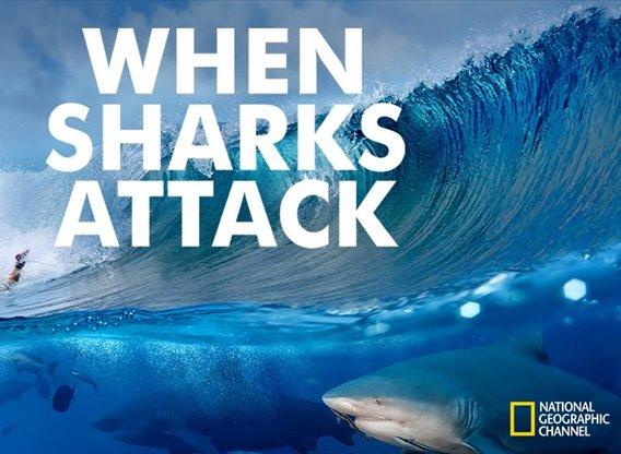 When Sharks Attack TV Show - Season 4 Episodes List - Next